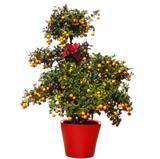 Chậu trồng hoa thông minh Mini13