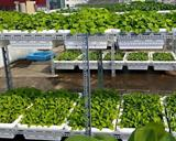 Kệ thép trồng rau