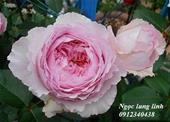 Hoa ngọc lung linh
