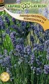 Oải hương Lavender A
