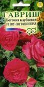 Thu hải đường Go-Go cherry hồng F1