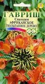 spathodea Phi Tulip