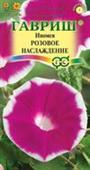 Morning Glory Rosita hồng viền tím