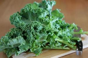 Cải Kale – cải xoăn organic