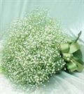 Hoa baby - hoa của tình yêu