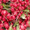 Củ cải đỏ và kỹ thuật trồng