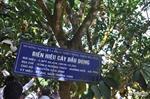 Hà Tĩnh: Khó tin cây bưởi Phúc Trạch đậu 500 quả