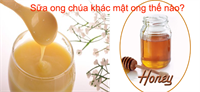 Sữa ong chúa khác mật ong thế nào?