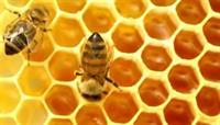Sữa ong chúa lấy từ đâu ra, cách khai thác sữa ong chúa tự nhiên