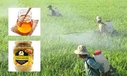 Sự thật phấn hoa nhiễm thuốc trừ sâu