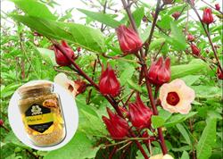 Phấn hoa atisô  – Sự thật