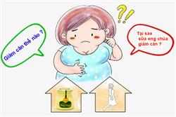 Sữa ong chúa giảm cân | Hiệu quả và đơn giản