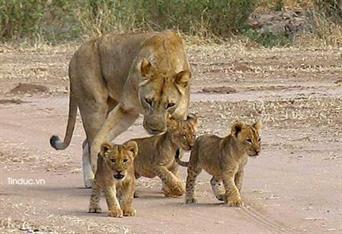 GPS: Đồng hành bảo vệ động vật hoang dã