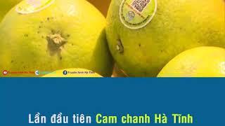 Quả cam chanh Hương Khê lên kệ của siêu thị Vinmart tại hà nội
