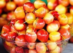 Cherry vàng Canada