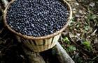 Brazil gia tăng đất nông nghiệp hữu cơ