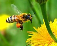 Phấn hoa là gì? Tác dụng, cách sử dụng phấn hoa